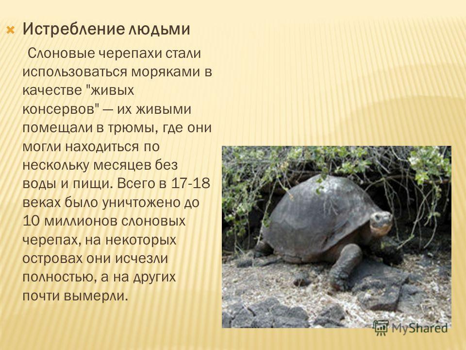 Истребление людьми Слоновые черепахи стали использоваться моряками в качестве