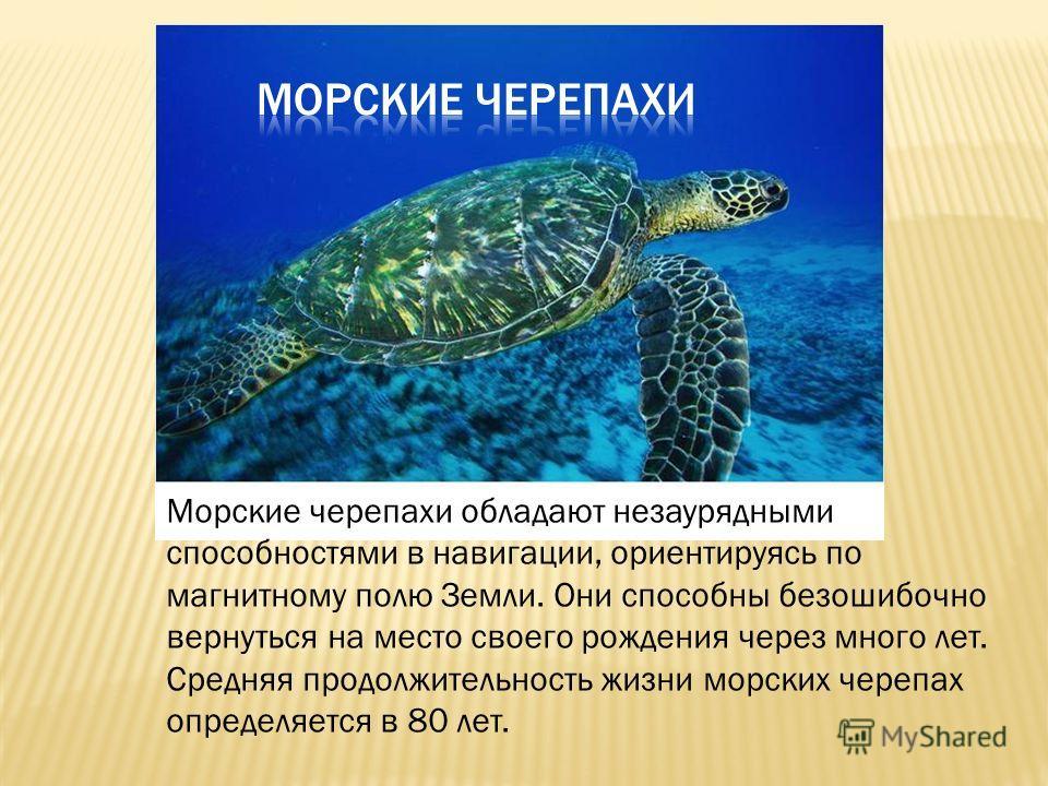 Морские черепахи обладают незаурядными способностями в навигации, ориентируясь по магнитному полю Земли. Они способны безошибочно вернуться на место своего рождения через много лет. Средняя продолжительность жизни морских черепах определяется в 80 ле
