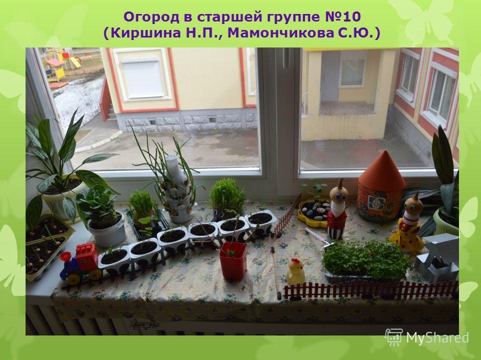 Огород в старшей группе 10 (Киршина Н.П., Мамончикова С.Ю.)