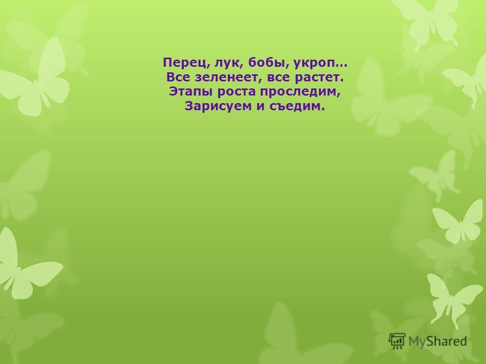 Перец, лук, бобы, укроп… Все зеленеет, все растет. Этапы роста проследим, Зарисуем и съедим.
