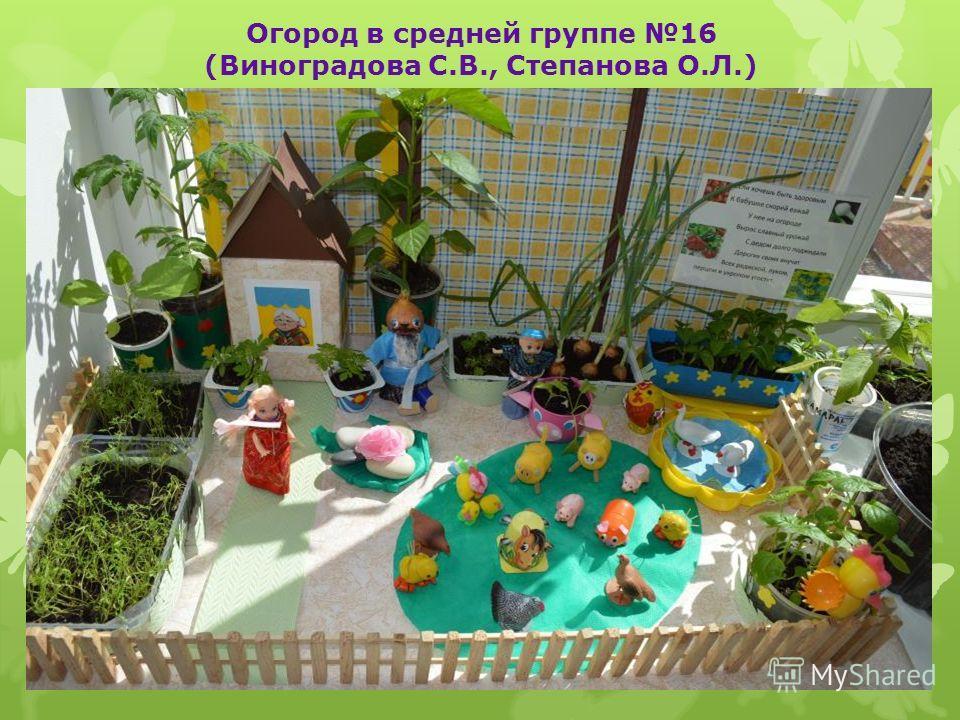 Огород в средней группе 16 (Виноградова С.В., Степанова О.Л.)
