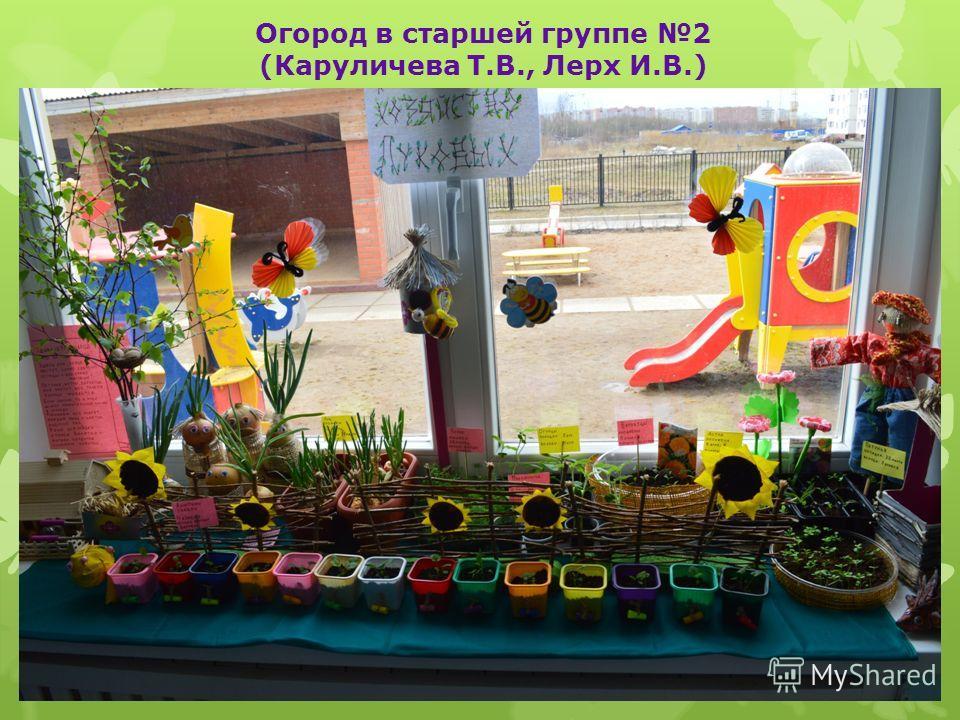 Огород в старшей группе 2 (Каруличева Т.В., Лерх И.В.)