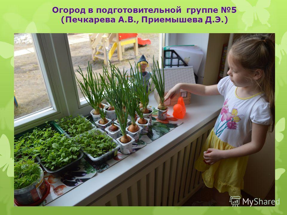 Огород в подготовительной группе 5 (Печкарева А.В., Приемышева Д.Э.)