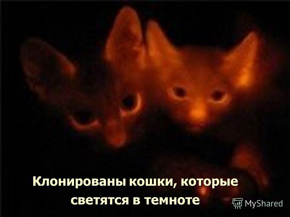 Клонированы кошки, которые светятся в темноте