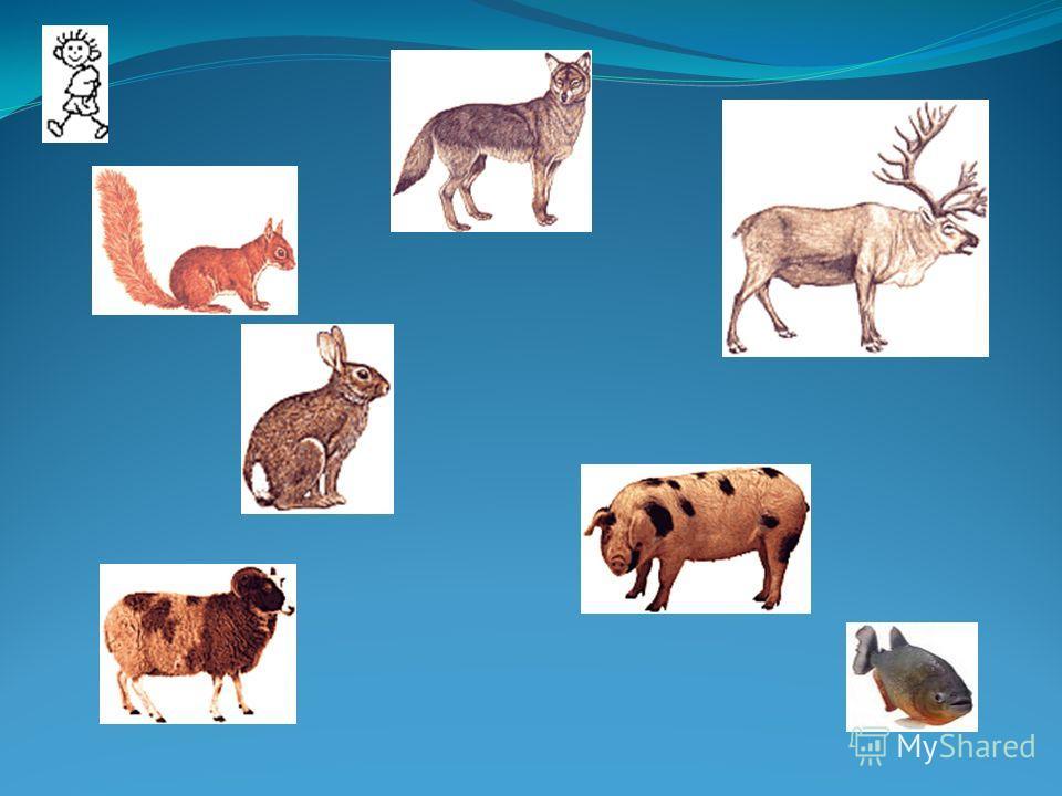 Животный мир ТАТАРИИ