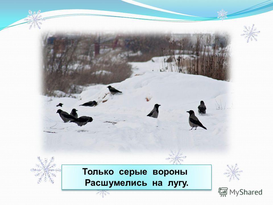 Только серые вороны Расшумелись на лугу. Только серые вороны Расшумелись на лугу.