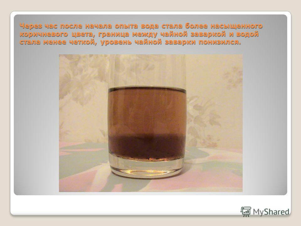 Через час после начала опыта вода стала более насыщенного коричневого цвета, граница между чайной заваркой и водой стала менее четкой, уровень чайной заварки понизился.
