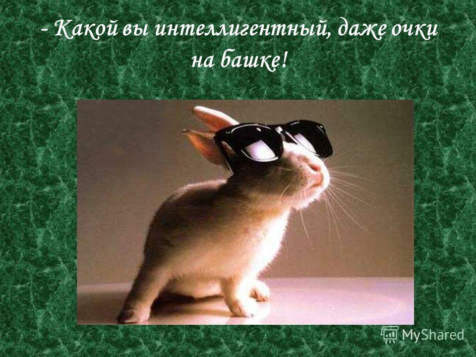 - Какой вы интеллигентный, даже очки на башке!