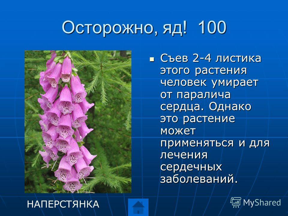 Осторожно, яд! 100 Съев 2-4 листика этого растения человек умирает от паралича сердца. Однако это растение может применяться и для лечения сердечных заболеваний. Съев 2-4 листика этого растения человек умирает от паралича сердца. Однако это растение