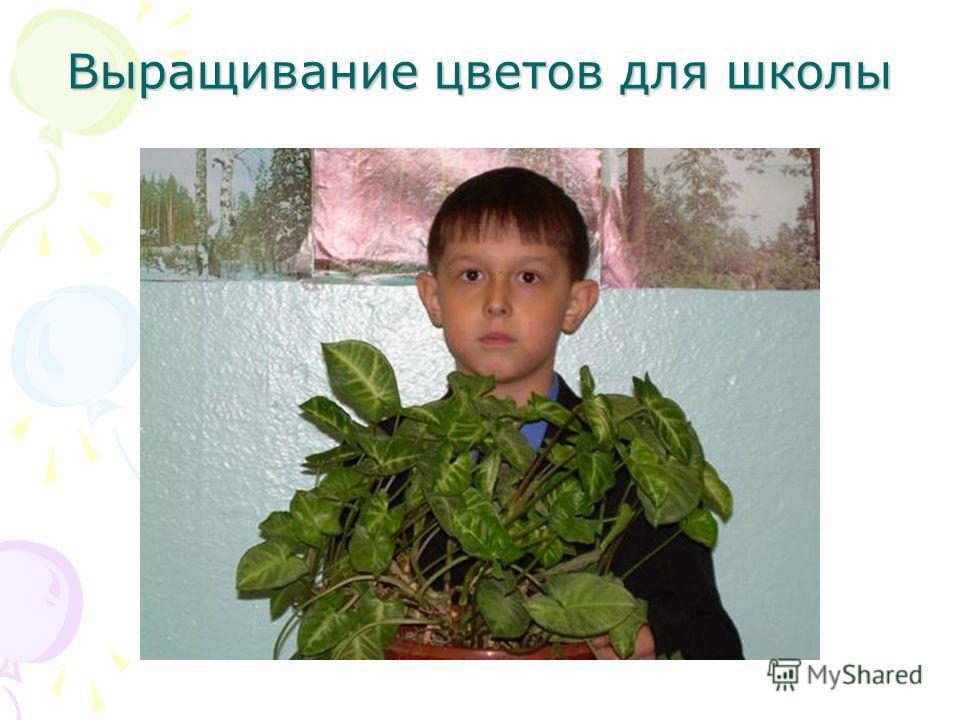 Выращивание цветов для школы