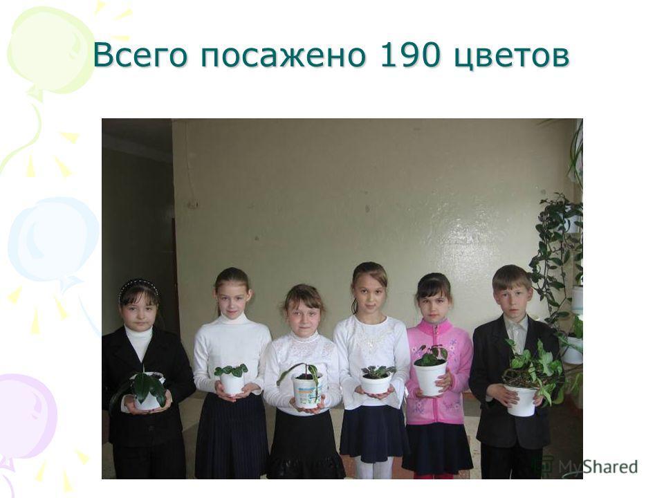 Всего посажено 190 цветов