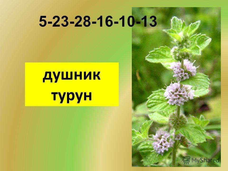 душник турун 5-23-28-16-10-13