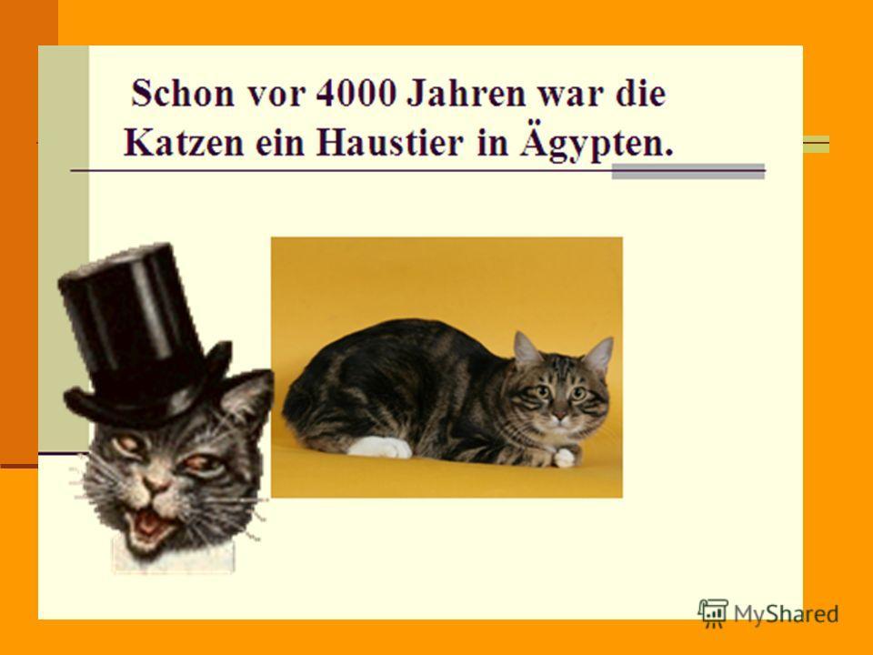 Die Hauskatze gehört zu der Familie der Katzen wie der Tiger, der Löwe, der Leopard und viele andere Tiere.. Eine lustige Familie, nicht wahr?