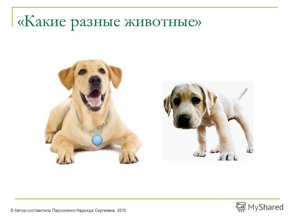 «Какие разные животные» © Автор-составитель Пархоменко Надежда Сергеевна, 2010