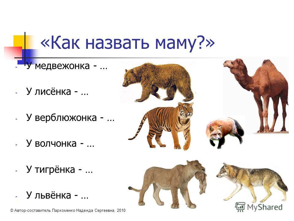 «Как назвать маму?» - У медвежонка - … - У лисёнка - … - У верблюжонка - … - У волчонка - … - У тигрёнка - … - У львёнка - … © Автор-составитель Пархоменко Надежда Сергеевна, 2010