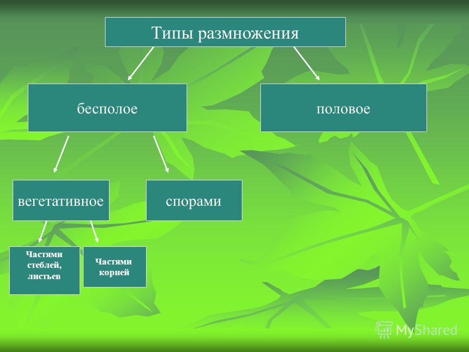 Типы размножения бесполоеполовое вегетативноеспорами Частями корней Частями стеблей, листьев