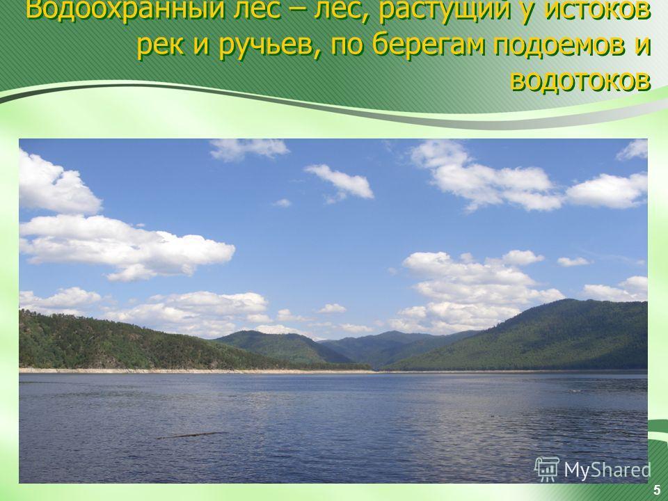 Водоохранный лес – лес, растущий у истоков рек и ручьев, по берегам подоемов и водотоков 5