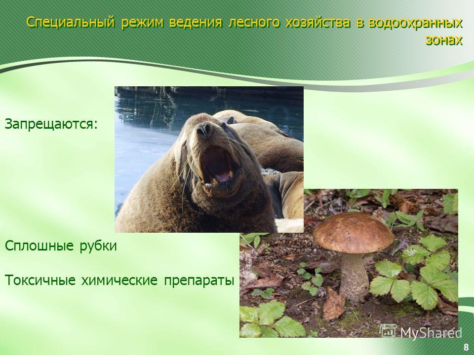Специальный режим ведения лесного хозяйства в водоохранных зонах Запрещаются: Сплошные рубки Токсичные химические препараты 8