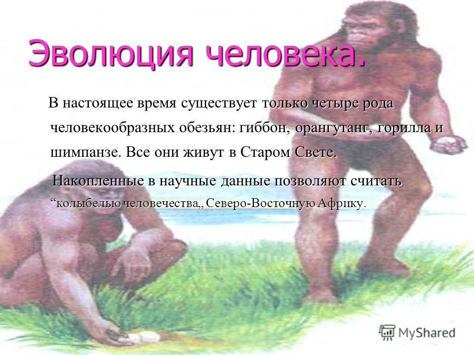 Эволюция человека. В настоящее время существует только четыре рода человекообразных обезьян: обезьян: гиббон, гиббон, орангутанг, орангутанг, горилла и шимпанзе. Все они живут в Старом Свете. Накопленные в научные данные позволяют считать колыбелью ч