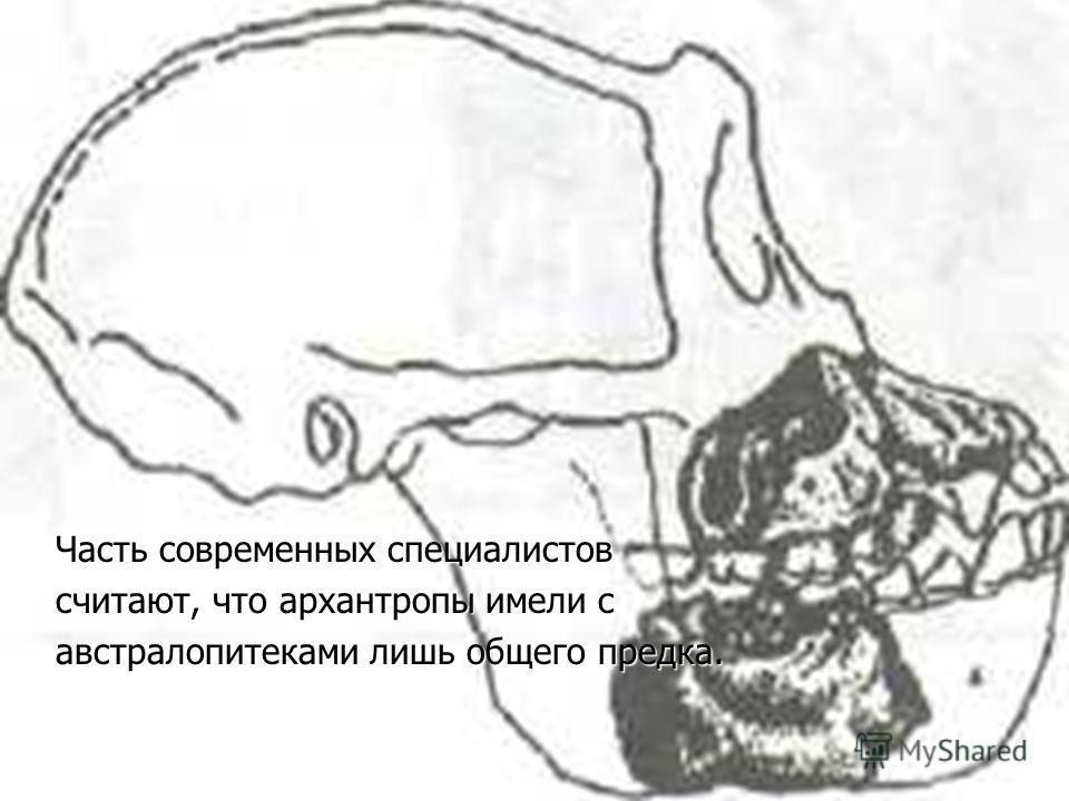 Часть современных специалистов считают, что архантропы имели с австралопитеками лишь общего предка.