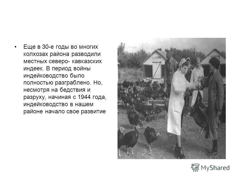 Еще в 30-е годы во многих колхозах района разводили местных северо- кавказских индеек. В период войны индейководство было полностью разграблено. Но, несмотря на бедствия и разруху, начиная с 1944 года, индейководство в нашем районе начало свое развит