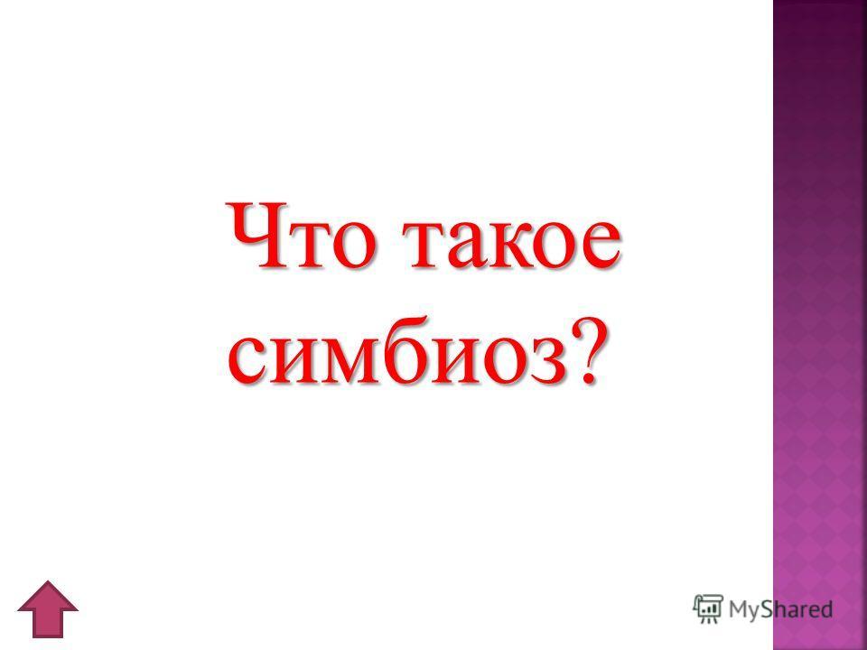 Что такое симбиоз?