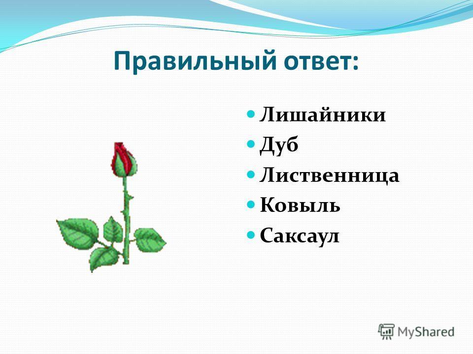Станция «Ботаническая» Узнай растение по описанию и назови его: Это растение похоже на накипь или корочку, растет на валунах и скалах. У этого растения могучий ствол, огромная крона, красивые резные листовые пластинки, а плодами любят лакомиться каба