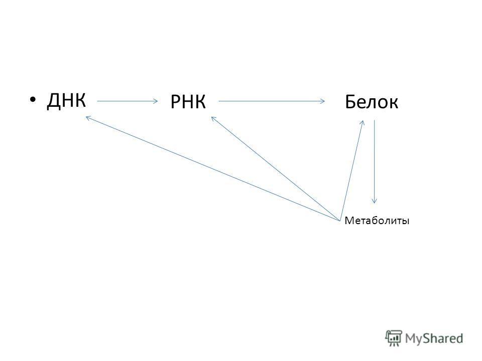 ДНК РНКБелок Метаболиты