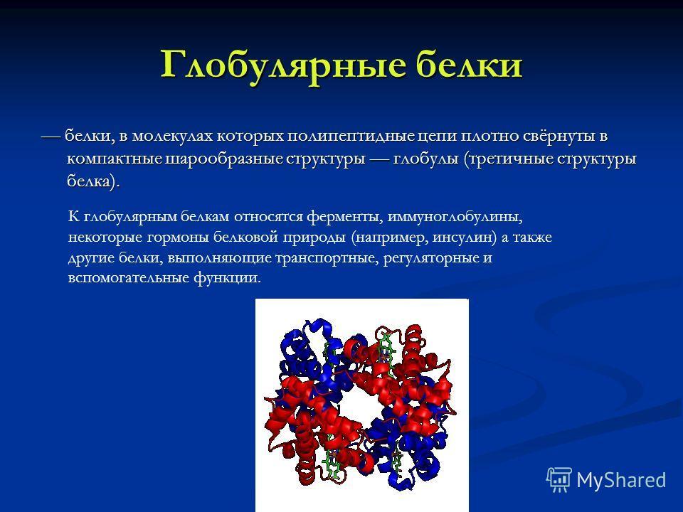 Глобулярные белки белки, в молекулах которых полипептидные цепи плотно свёрнуты в компактные шарообразные структуры глобулы (третичные структуры белка). белки, в молекулах которых полипептидные цепи плотно свёрнуты в компактные шарообразные структуры
