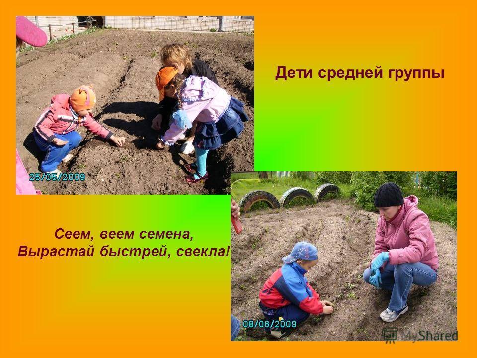Дети средней группы Сеем, веем семена, Вырастай быстрей, свекла!