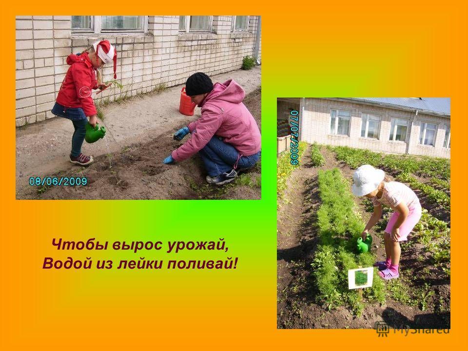Чтобы вырос урожай, Водой из лейки поливай!