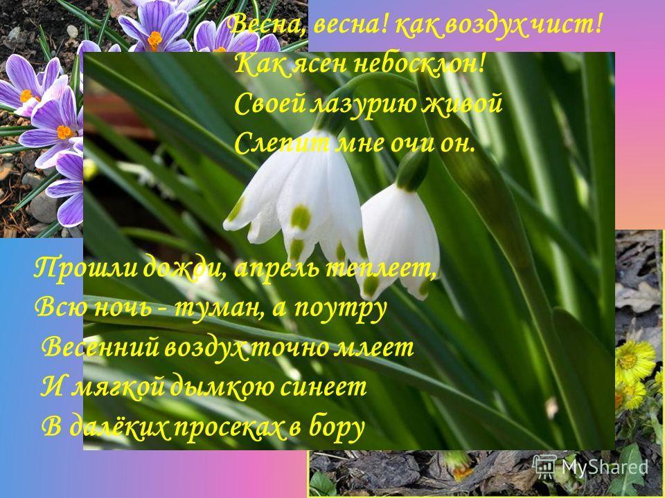 Весна, весна! как воздух чист! Как ясен небосклон! Своей лазурию живой Слепит мне очи он. Прошли дожди, апрель теплеет, Всю ночь - туман, а поутру Весенний воздух точно млеет И мягкой дымкою синеет В далёких просеках в бору