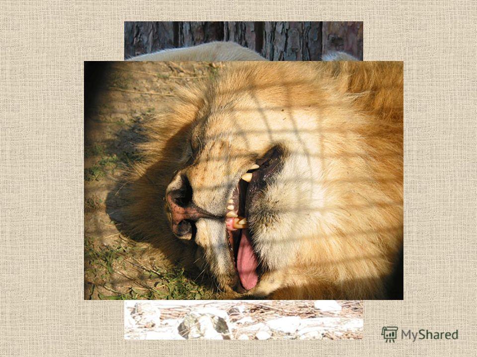 Тихий час в зоопарке (слайд-шоу)