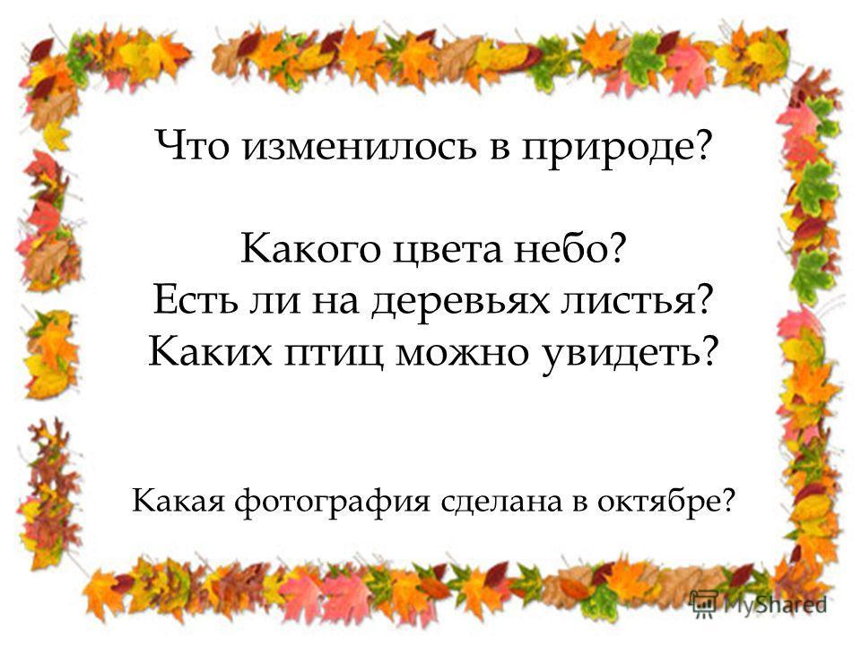 Что изменилось в природе? Какого цвета небо? Есть ли на деревьях листья? Каких птиц можно увидеть? Какая фотография сделана в октябре?