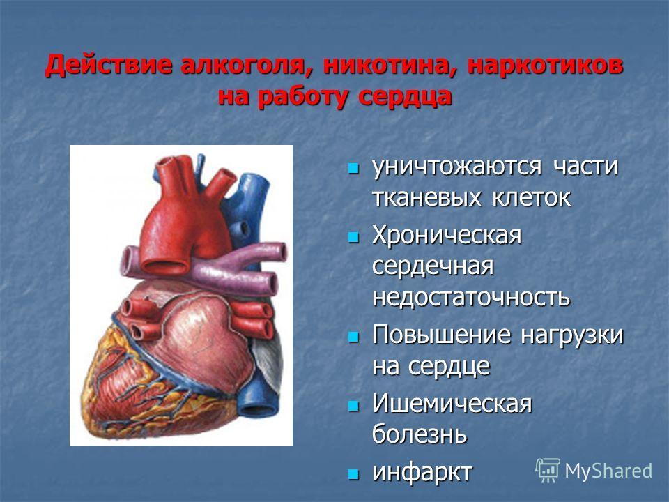 Действие алкоголя, никотина, наркотиков на работу сердца уничтожаются части тканевых клеток уничтожаются части тканевых клеток Хроническая сердечная недостаточность Хроническая сердечная недостаточность Повышение нагрузки на сердце Повышение нагрузки