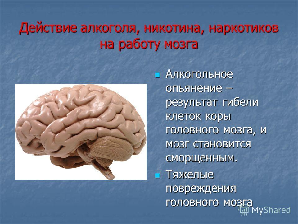 Действие алкоголя, никотина, наркотиков на работу мозга Алкогольное опьянение – результат гибели клеток коры головного мозга, и мозг становится сморщенным. Алкогольное опьянение – результат гибели клеток коры головного мозга, и мозг становится сморще