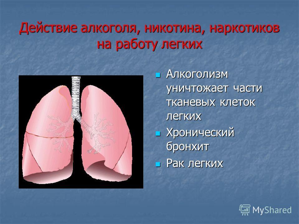 Действие алкоголя, никотина, наркотиков на работу легких Алкоголизм уничтожает части тканевых клеток легких Алкоголизм уничтожает части тканевых клеток легких Хронический бронхит Хронический бронхит Рак легких Рак легких