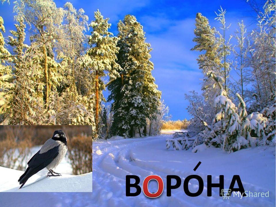 В. РОНА