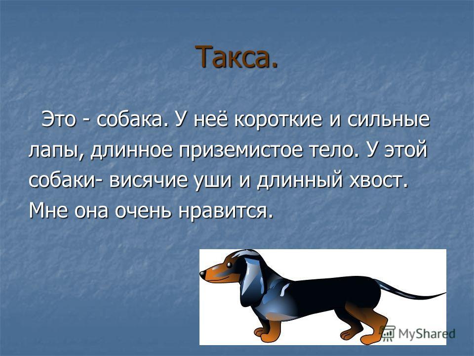 Такса. Это - собака. У неё короткие и сильные Это - собака. У неё короткие и сильные лапы, длинное приземистое тело. У этой собаки- висячие уши и длинный хвост. Мне она очень нравится.