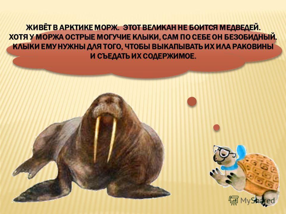 моржморж