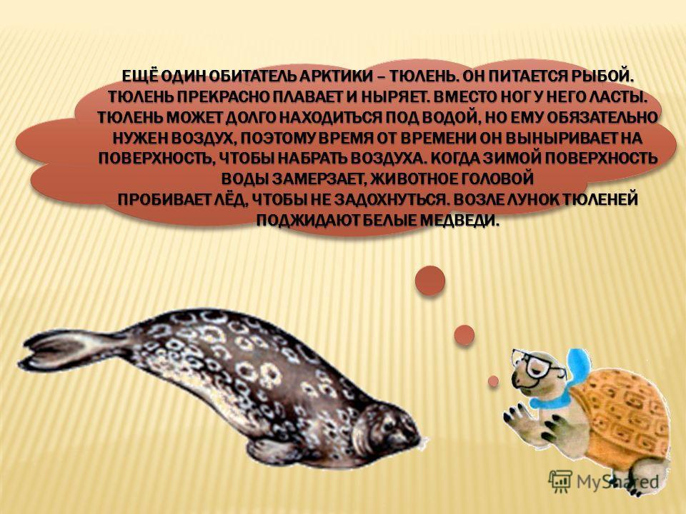 тюленьтюлень
