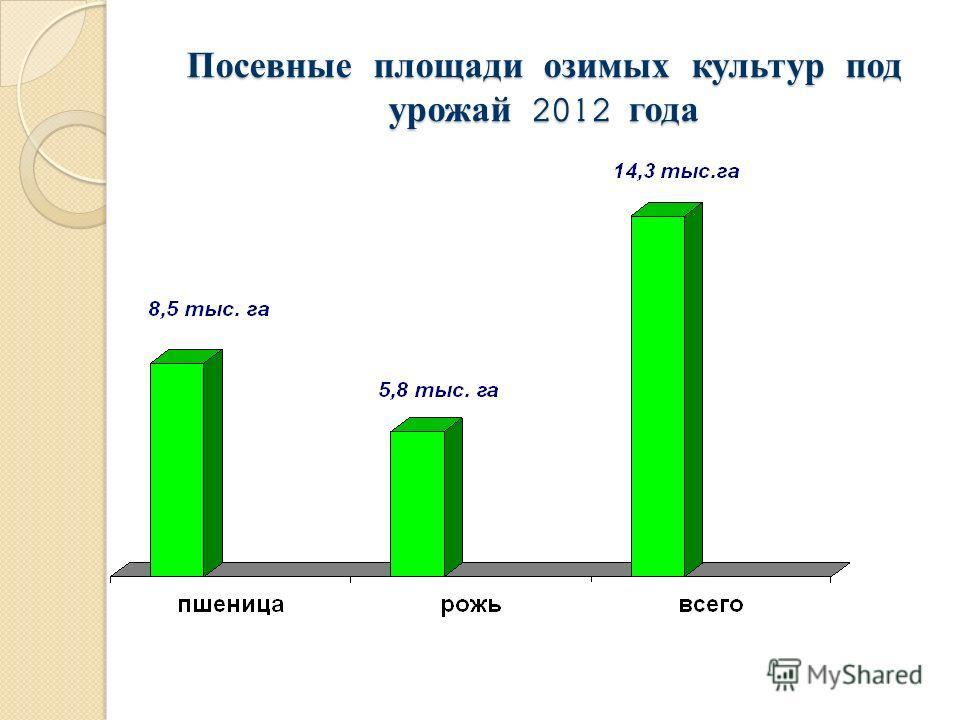 Посевные площади озимых культур под урожай 2012 года