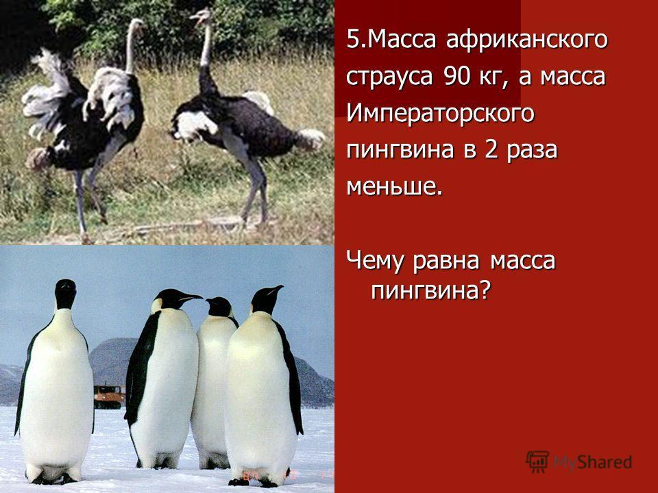 5.Масса африканского страуса 90 кг, а масса Императорского пингвина в 2 раза меньше. Чему равна масса пингвина?