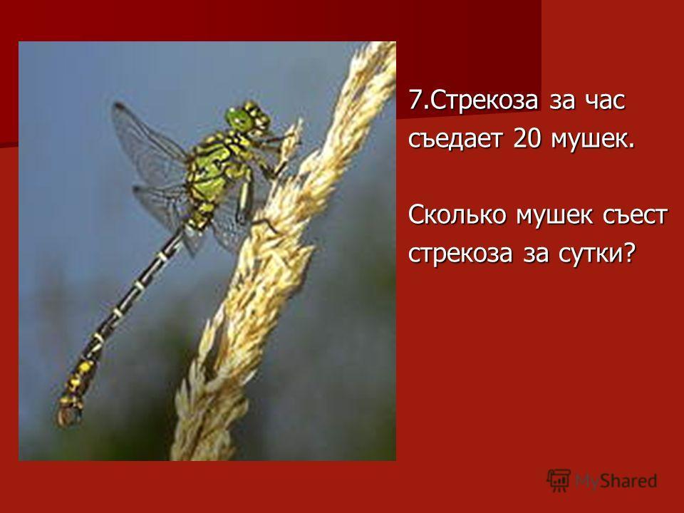 7.Стрекоза за час съедает 20 мушек. Сколько мушек съест стрекоза за сутки?