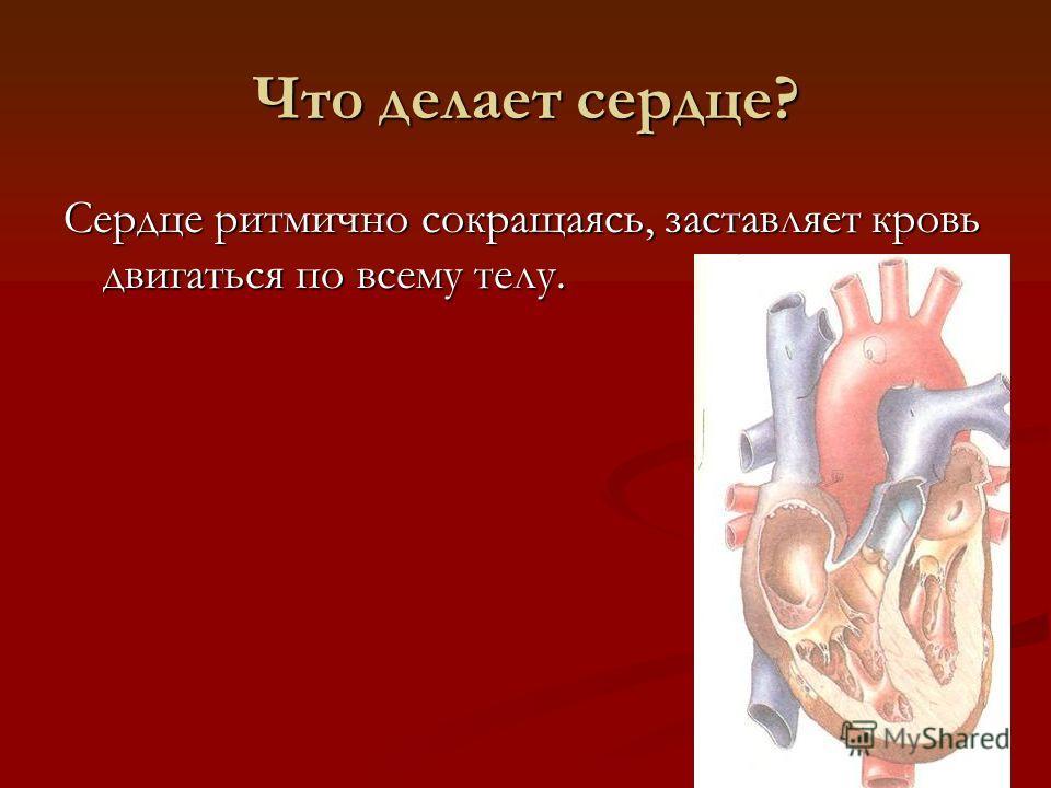 Что делает сердце? Сердце ритмично сокращаясь, заставляет кровь двигаться по всему телу.