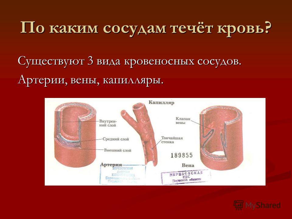 По каким сосудам течёт кровь? Существуют 3 вида кровеносных сосудов. Артерии, вены, капилляры.