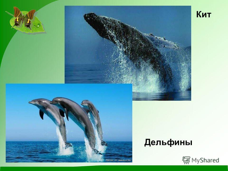 Кит Дельфины