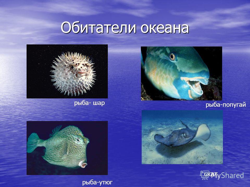 Обитатели океана рыба- шар рыба-утюг рыба-попугай скат