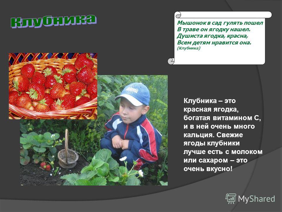 Мышонок в сад гулять пошел В траве он ягодку нашел. Душиста ягодка, красна, Всем детям нравится она. (Клубника) Клубника – это красная ягодка, богатая витамином С, и в ней очень много кальция. Свежие ягоды клубники лучше есть с молоком или сахаром –