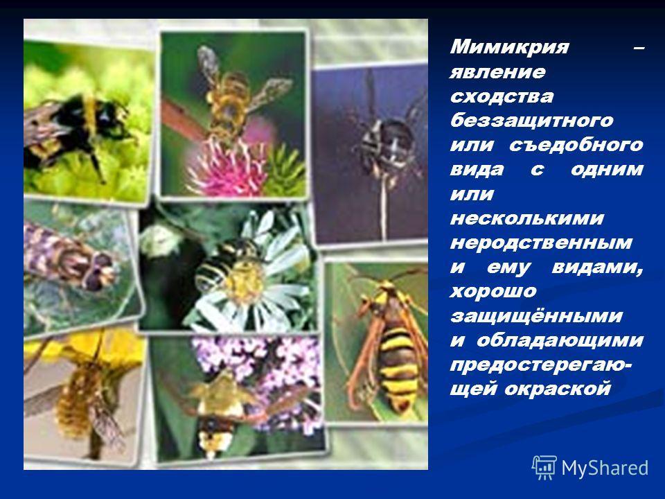 Мимикрия – явление сходства беззащитного или съедобного вида с одним или несколькими неродственным и ему видами, хорошо защищёнными и обладающими предостерегаю- щей окраской